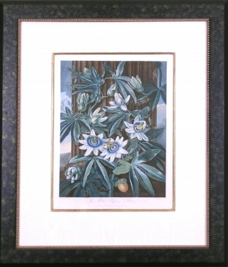 Robert John Thornton Dr Robert John Thornton The Blue Passion Flower 1800