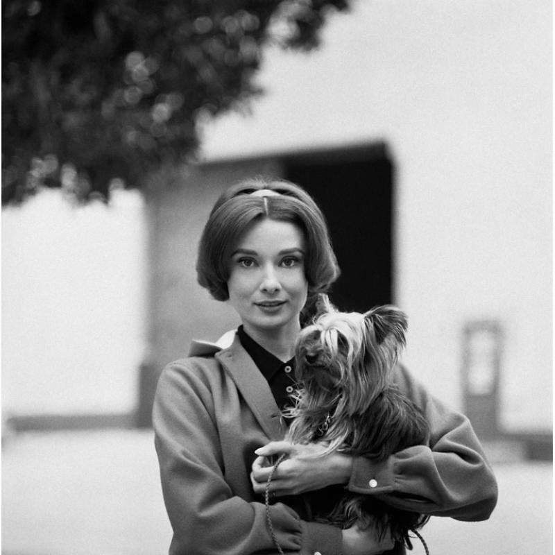 Sid Avery Audrey Hepburn with Her Pet Dog Famous on the Paramount Studio Backlot