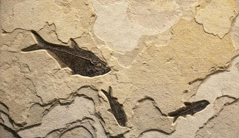 Small Fossil mural from the Eocene