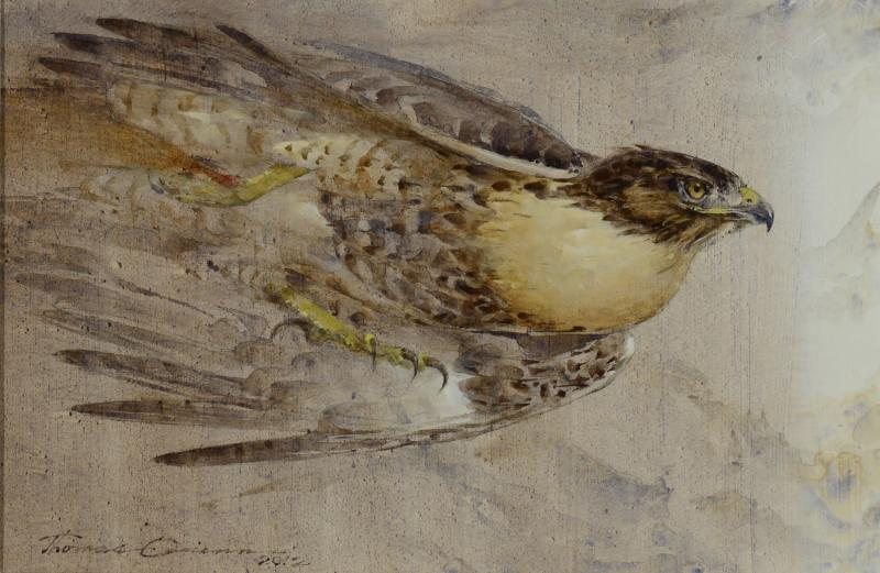Thomas Quinn Red Tail Rush