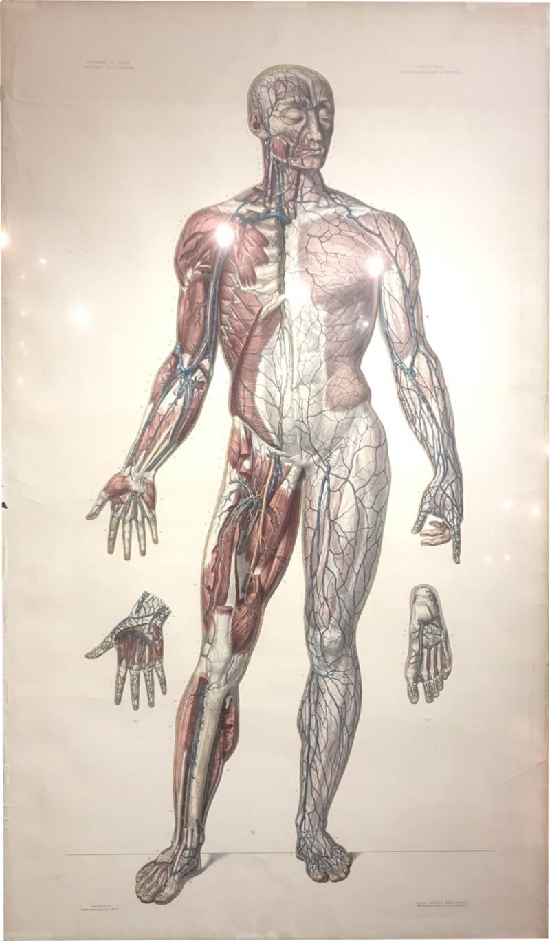 Vascular System by Doctor Bourgery and artist Jacob
