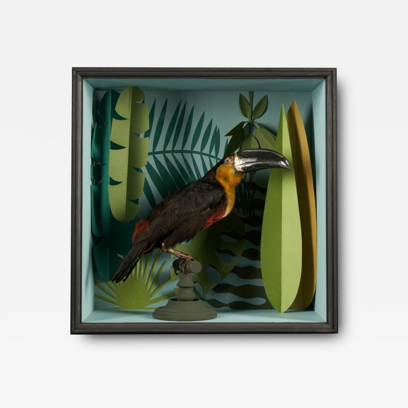 Vintage Toucans Taxidermy Selection in Designer Display Cases