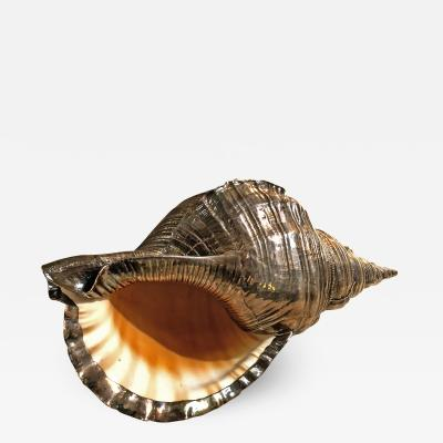 Buccellati Silvered Shell Sculpture by Buccellati Italy 1980s