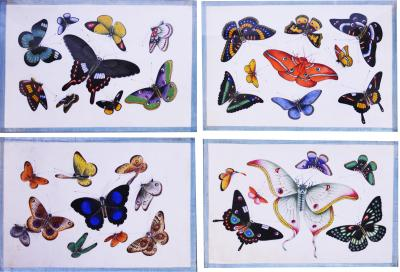 China School China Export Watercolours on Pith PAper set of Twelve Butterflies