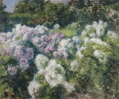 Gaines Ruger Donoho Sketch of Phlox