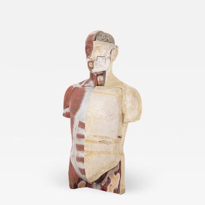 Paravia Torino Vintage Medic Anatomical Bust by Paravia Torino