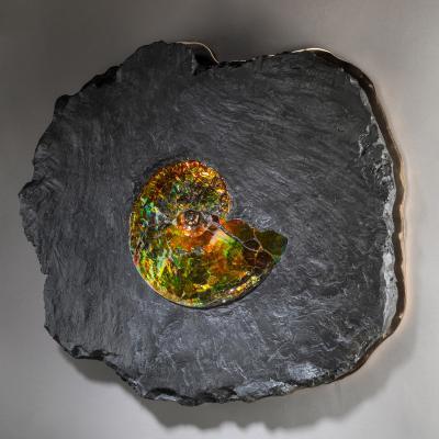 Studio Greytak Studio Greytak Ammonite on Bronze Ammonite and Mirror Polished Bronze Wall Art