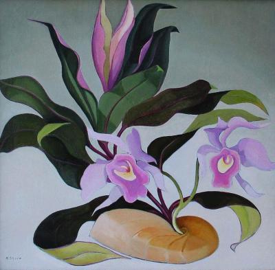 Henrietta Mary Shore Orchid Tango aka Hybrids