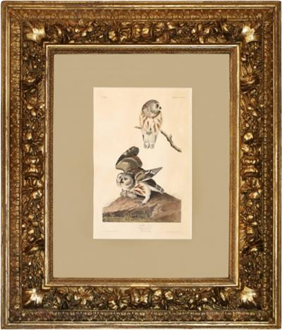 John James Audubon Monumental Framed Audubon Print of The Little Owl 1834 Havell Edition