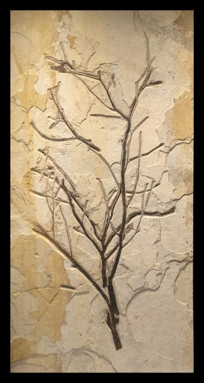 50 Million Year Old Fossil Branch