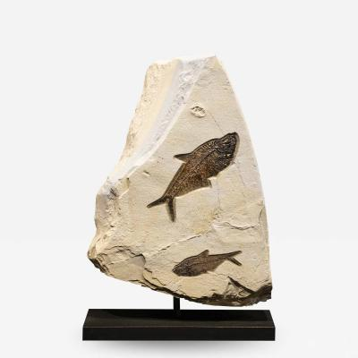 50 Million year Old Fossil Sculpture containing three fossils