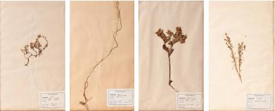 A Set of 3 Framed Pressed Botanicals with Hand Written Labels
