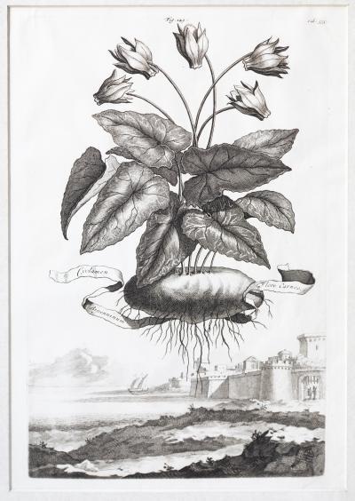 Abraham Munting SET OF 6 BLACK AND WHITE BOTANICAL PRINTS BY ABRAHAM MUNTING 1626 1683