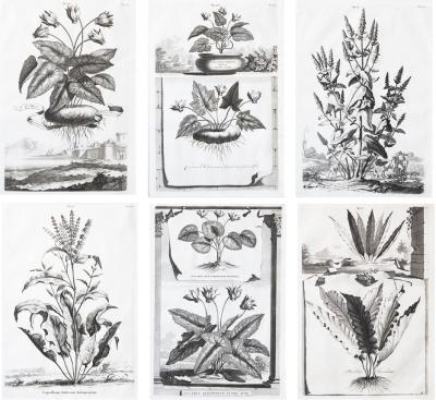 Abraham Munting SET OF 6 BLACK AND WHITE BOTANICAL PRINTS BY ABRAHAM MUNTING 1626 1683