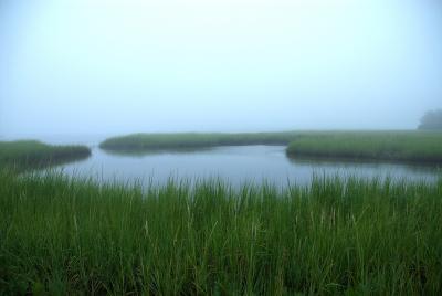 Adriana Echavarria Sea Grass