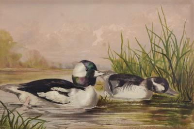 Alexander Pope Alexander Pope Group of Six Water Fowl