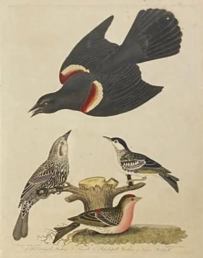 Alexander Wilson Set Of Twelve Hand Colored Engravings Of Birds By Alexander Wilson