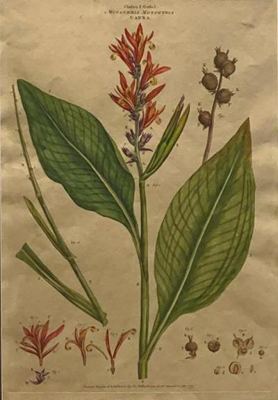 An 18th Century English Botanical