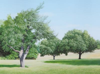 Anita Mazzucca Trees on Bayonet Farm