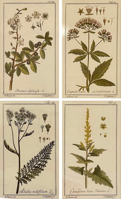 Antique Hand Colored Beautifully Framed Botanical Prints Set of 4