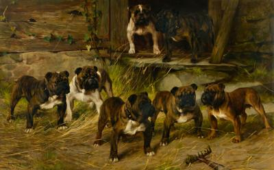 Arthur Wardle Portrait of English Bulldogs in a Kennel