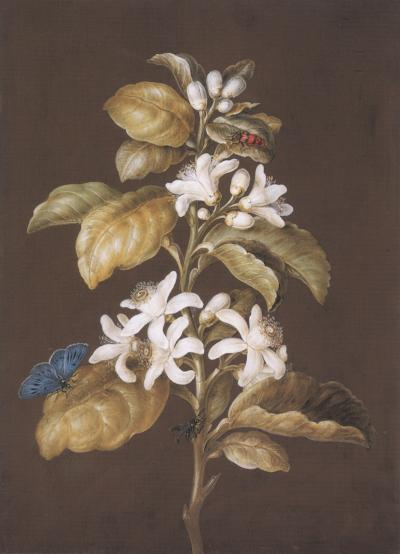 Barbara Regina Dietzch An Orange Blossom with a Beetle a Butterfly and a Fly