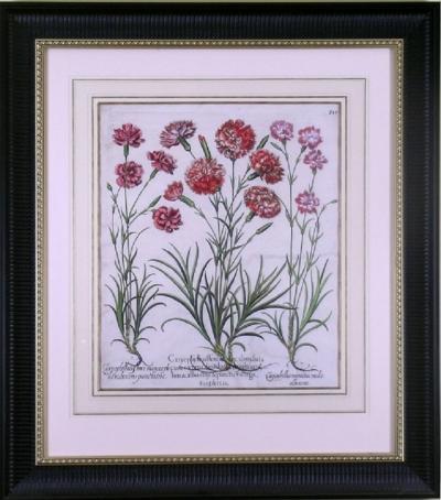 Basilius Besler Basilius Besler Caryophyllus Major Carnations 1613