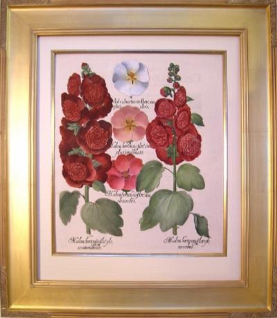 Basilius Besler Basilius Besler Malva hortensis flore Hollyhock Mallow 1613