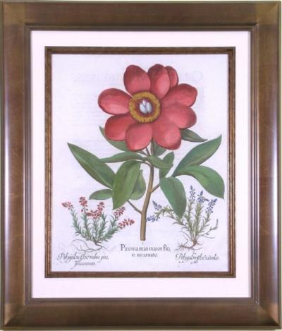Basilius Besler Basilius Besler Paeonia polyanthos maior flore Peony 1713