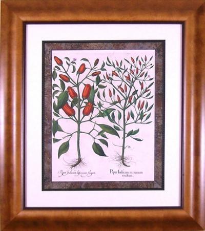 Basilius Besler Basilius Besler Piper Indicum Pepper 1613