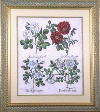 Basilius Besler Basilius Besler Rosa Roses 1730