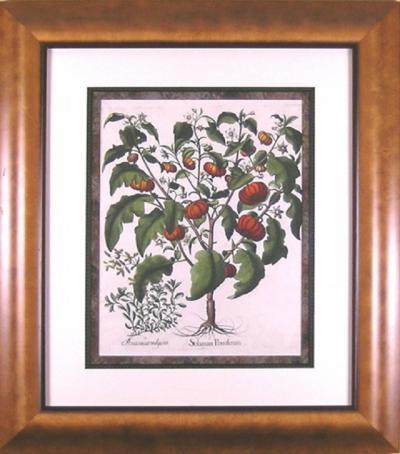 Basilius Besler Basilius Besler Solanum Pomiferum Tomato 1613