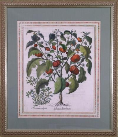 Basilius Besler Basilius Besler Solanum Pomiferum Tomato Vegetable 1613