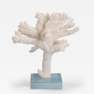 Branch Coral Specimen on Lucite