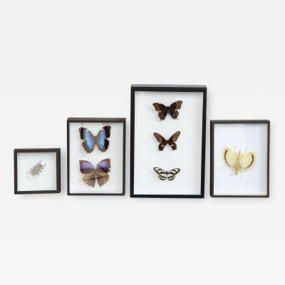 Butterflies Insects in Black Shadow Boxes