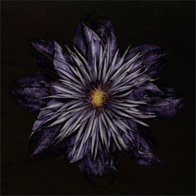 Carsten Witte Carsten Witte Clematis 5 2013 limited edition