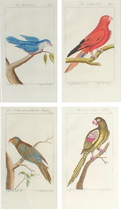 Charming Set of Four Antique Hand Colored Bird Engravings