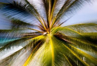 Chico Kfouri Tropical Photography 2019 by Brazilian Photographer Chico Kfouri