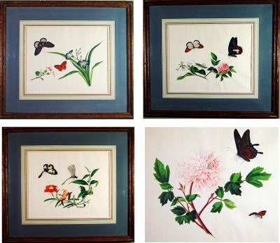 China Trade Large Botanical Butterfly Watercolors on Paper in a Set of Four