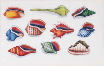 Chinese School China export watercolours on Pith Pare group of twleve Shells