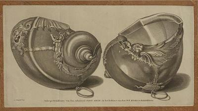 Circa 19th Century Baroque Sea Shell Drinking Cups Engraving