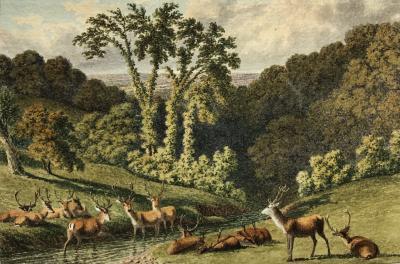 Continental School Deer by Stream