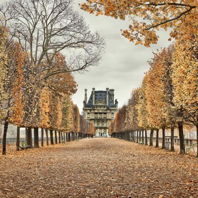 David Burdeny Red Leaves Paris