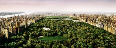 David Drebin Dreams of Central Park