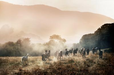 David Drebin horses in paradise