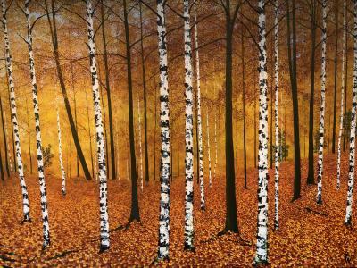David J Williams Golden Birches