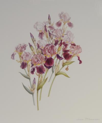 Dianne McElwain Iris