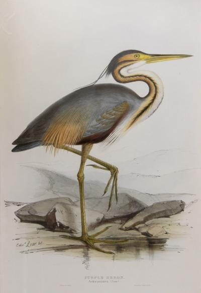 Edward Lear A Group of Four Wading Birds