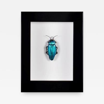 Emanuel Toffolo Murano Glass Chrysochroa Wallacei Insect