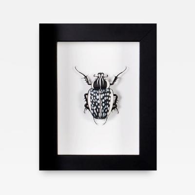 Emanuel Toffolo Murano Glass Goliathus Orientalis Beetle